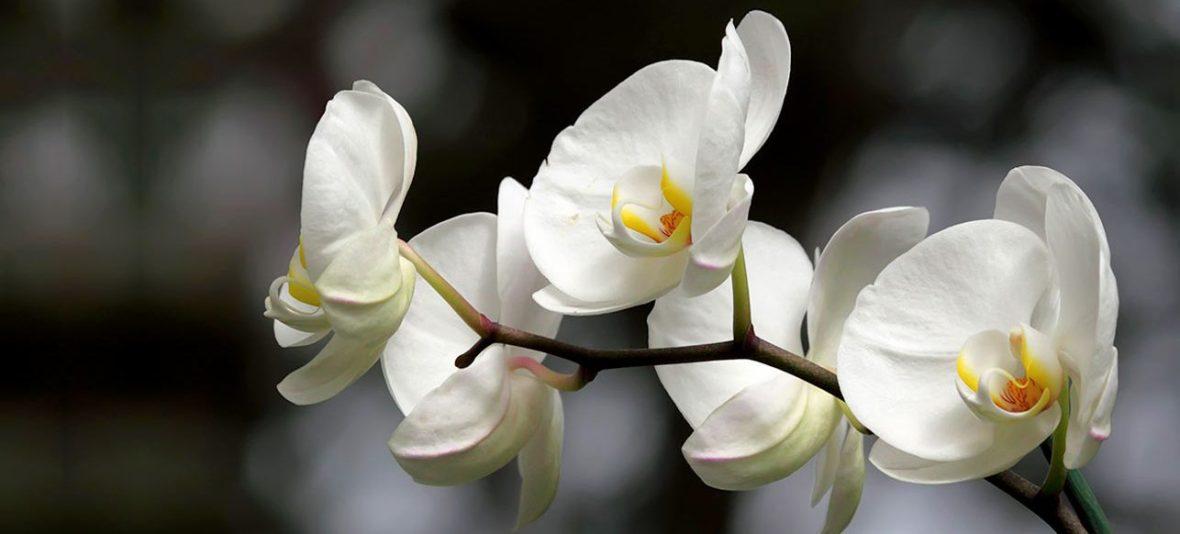 cropped-wittebloemen.jpg